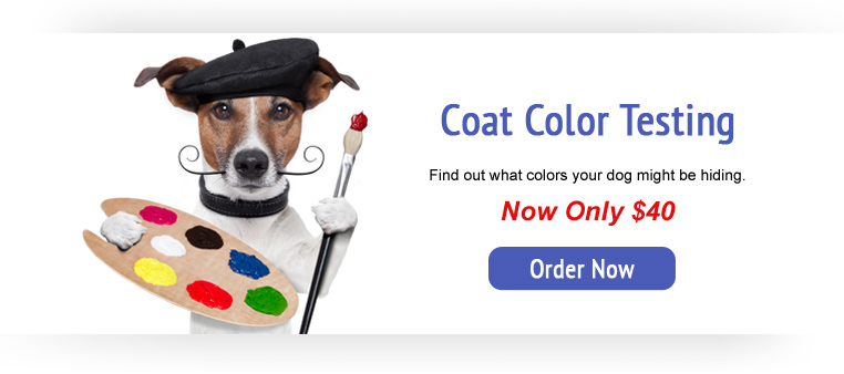 Coat Color Testing