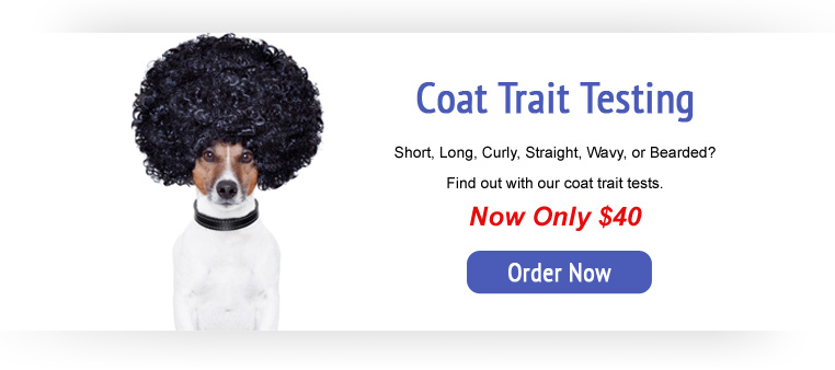 Coat Trait Testing